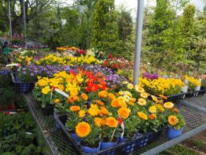 取手店の花々